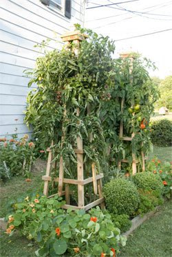 DIY tomato tower trellis instructions