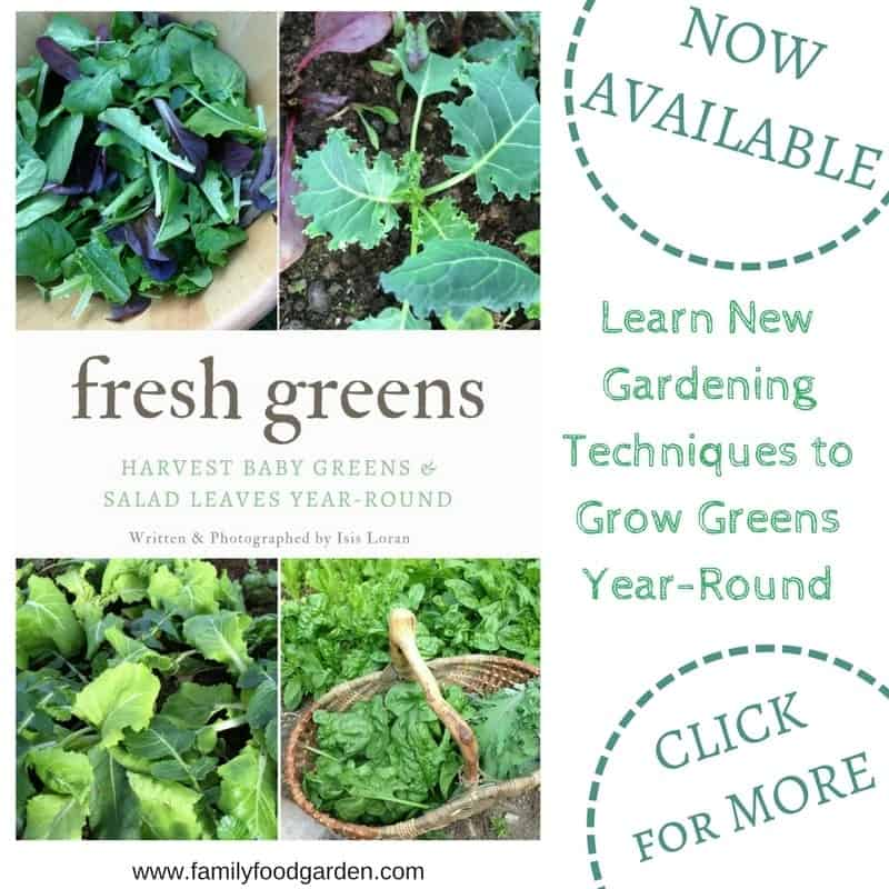 Learn how to grow salad greens year-round indoors and outside