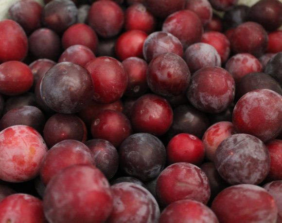 Italian Plum Wine Recipe
