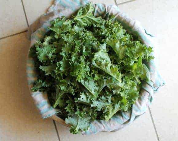 Dehydrated Kale Chip Recipe