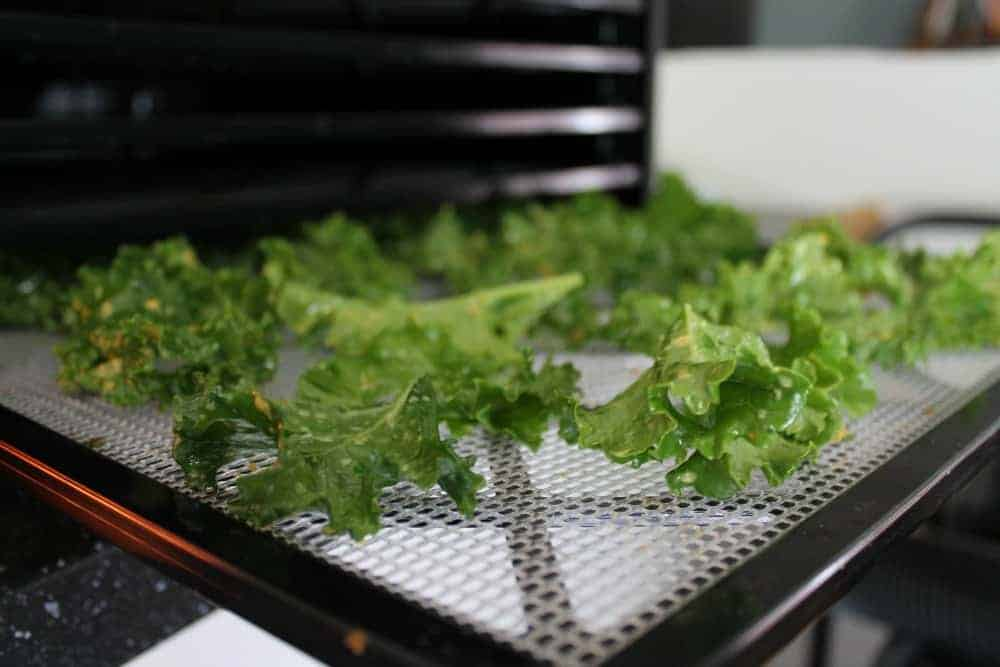 Kale chip recipe using Excalibur dehydrator