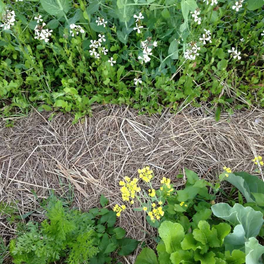 Best Garden Mulches Comparing Straw Vs Hay Vs Wood Chips Family
