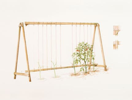 Best ways to trellis tomatoes