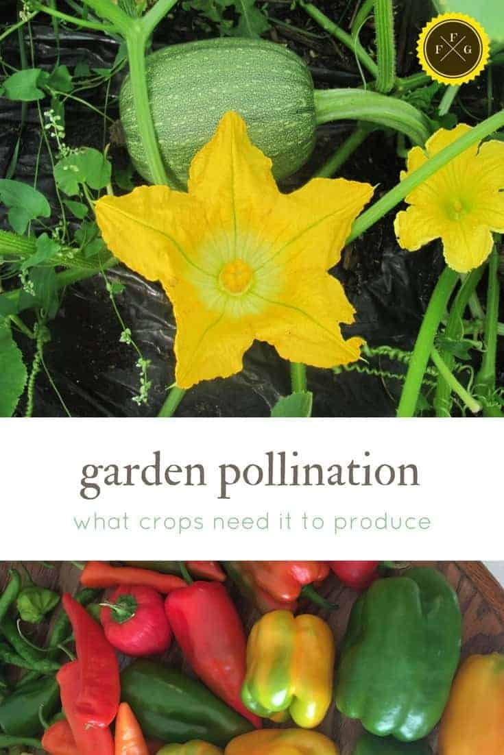 garden pollination- learn what crops needs pollinators to produce yields