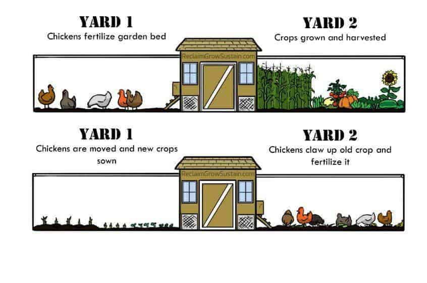 Chicken run ideas around the garden
