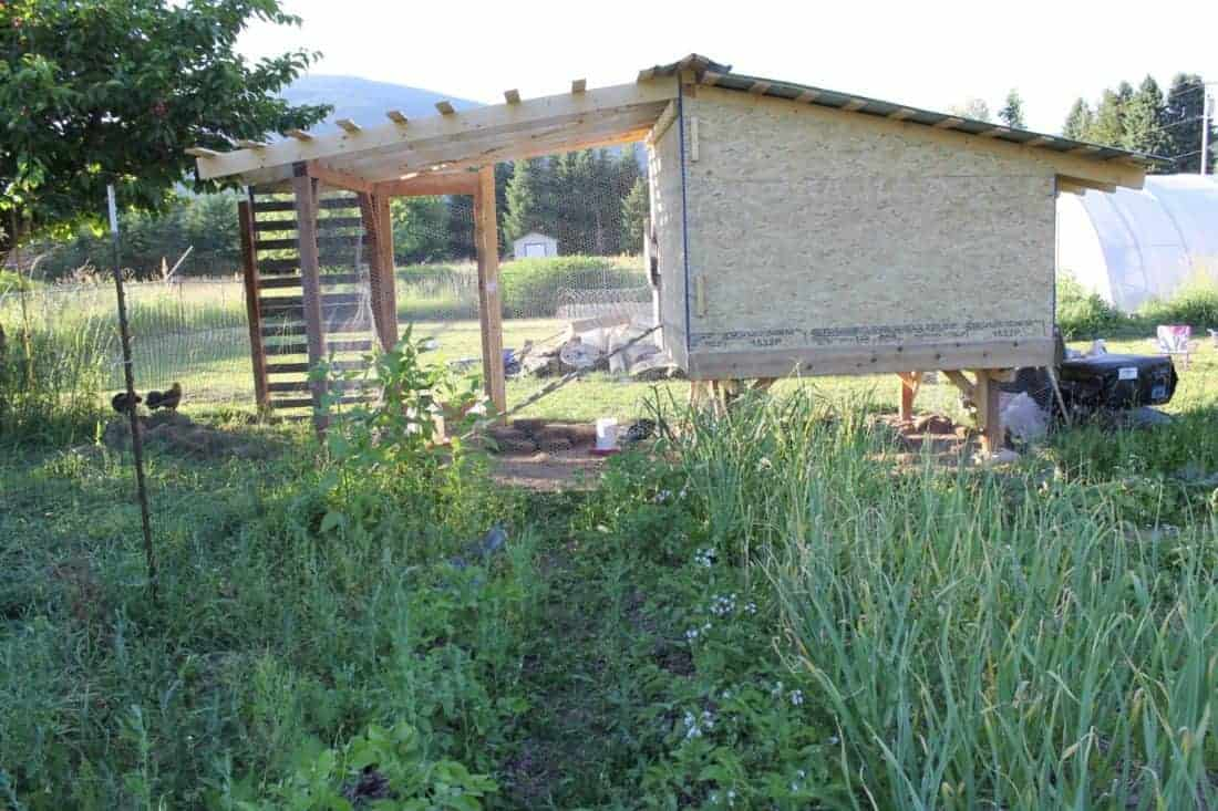 Chicken coop for 30 hens raised off the ground for snowy winters