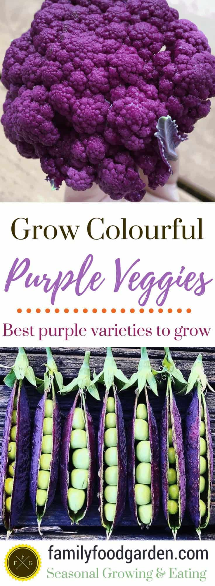 Beautiful purple vegetables to grow
