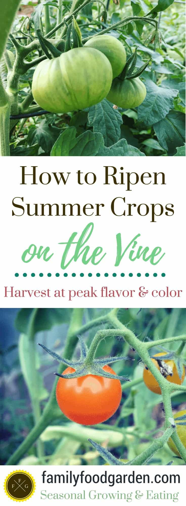 How to get Summer Crops to Color and Ripen on the Vine