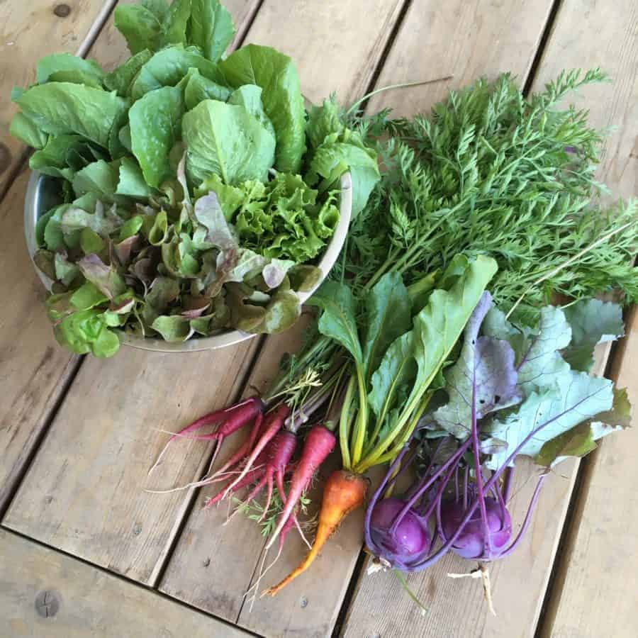 Year-round garden planting and harvesting