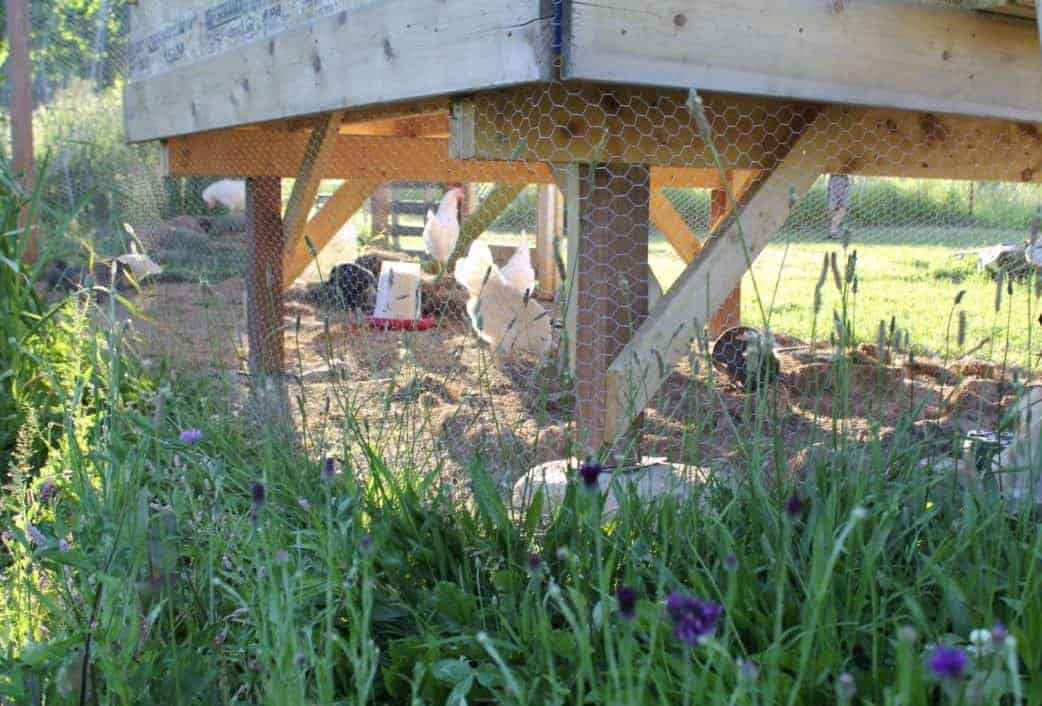 Permaculture Rotational Chicken Runs around your Garden