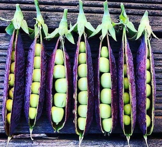 Growing purple vegetable varieties