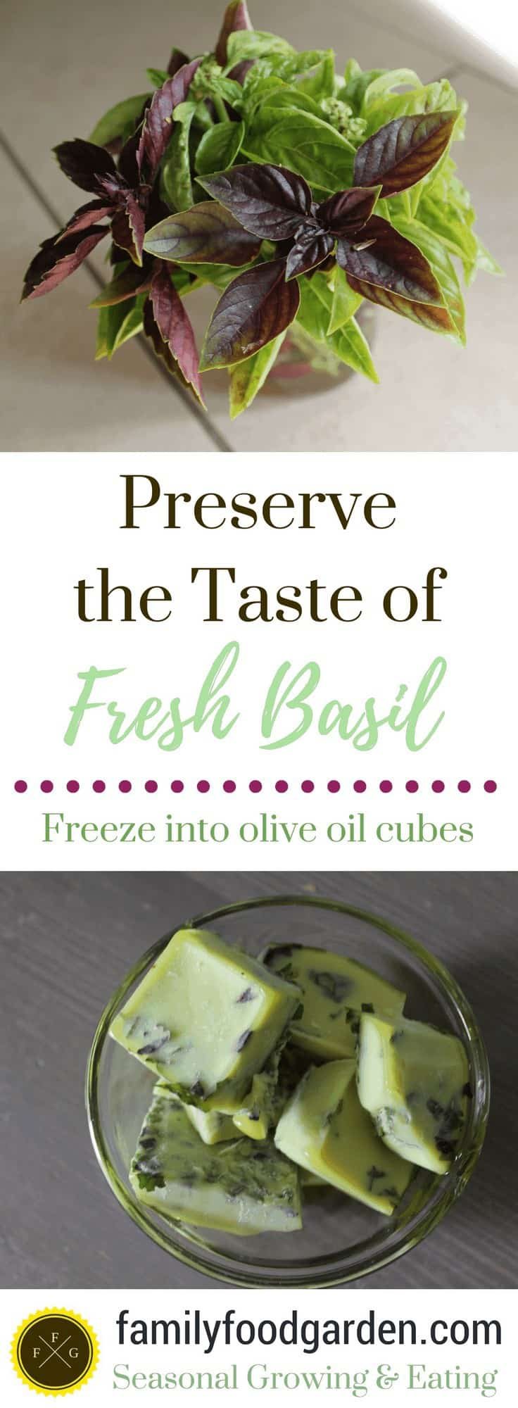 How to preserve fresh basil by freezing