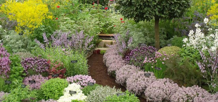 Backyard Landscaping & Garden Design Ideas | Family Food ...