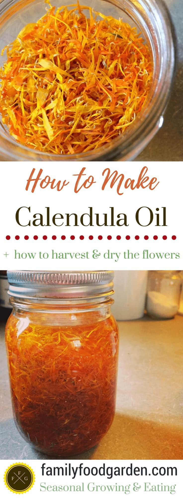 Learn how to harvest and dry calendula flowers and make your own herbal healing infusion of calendula oil. Step by step how to make calendula oil.