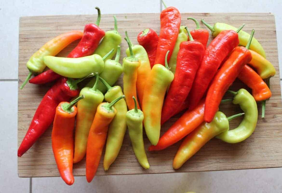 Growing Peppers + Types of Pepper Plants
