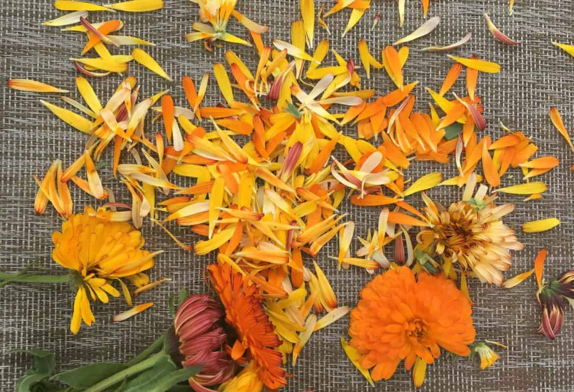 Dry Calendula Flowers & Make Calendula Oil