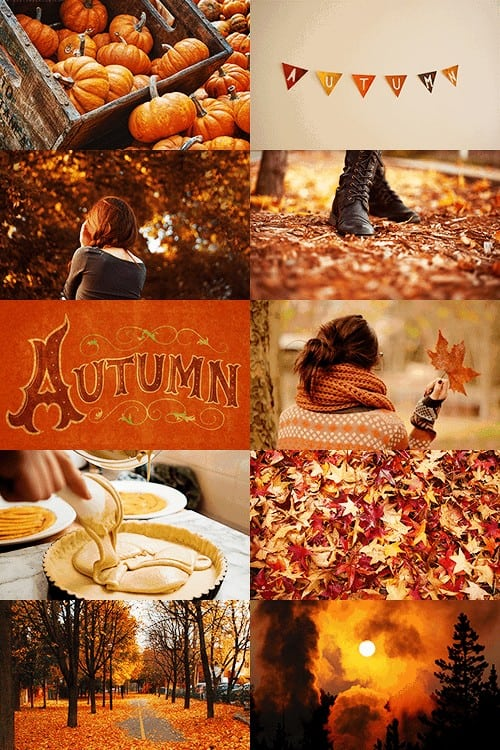 Ideas for a Cozy Fall: Autumn Recipes, Drinks, Decor & More