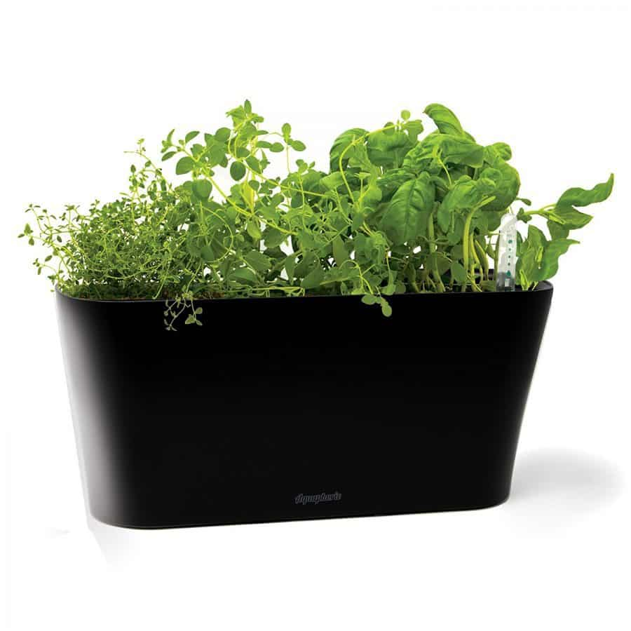 Kitchen Garden Kit: Indoor Herb Garden Kits For Fresh Kitchen Herbs