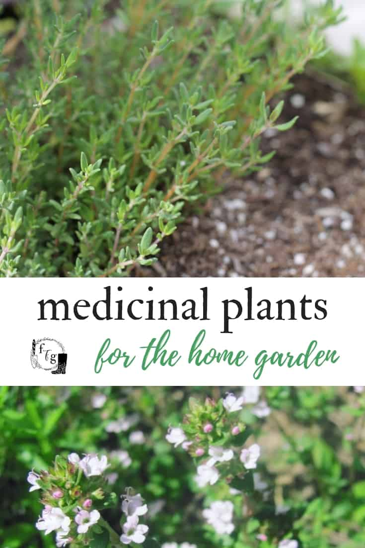 List of herbs to grow in a medicinal herb garden #herbalism #herbgardening #herbgarden #medicinalplants