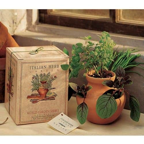 You Can Grow Your Own Groceries At Home From Old Kitchen: Indoor Herb Garden Kits For Fresh Kitchen Herbs
