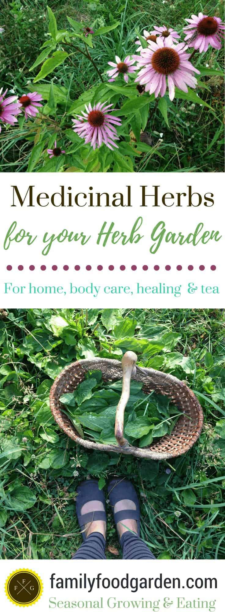 Medicinal Herbs to Plant in your Herb Garden
