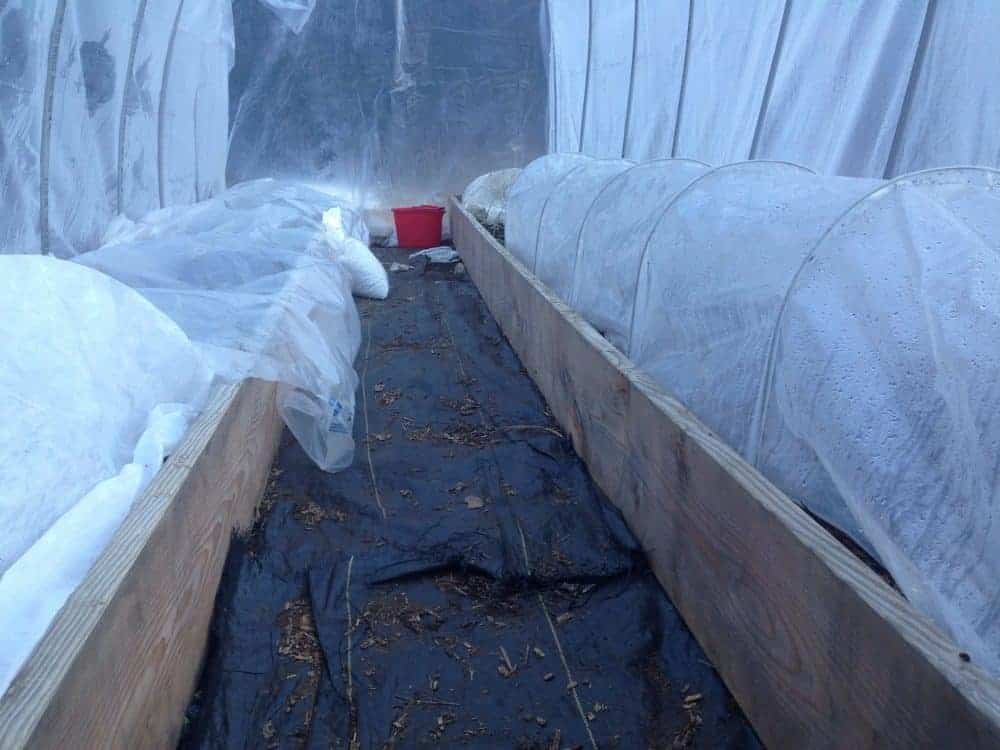 Double hoop tunnels- using low tunnels inside a greenhouse