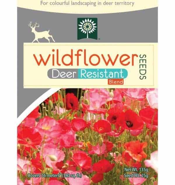 Deer resistant wildflowers