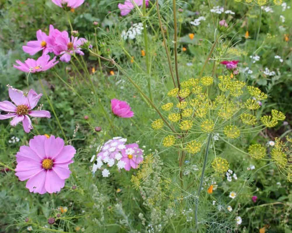 Wildflowers in a permaculture garden