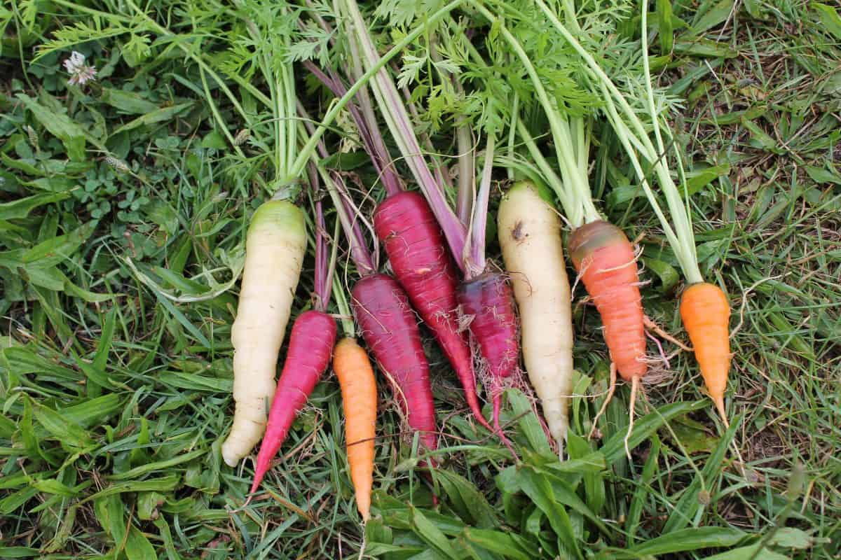 Best Garden Blogs