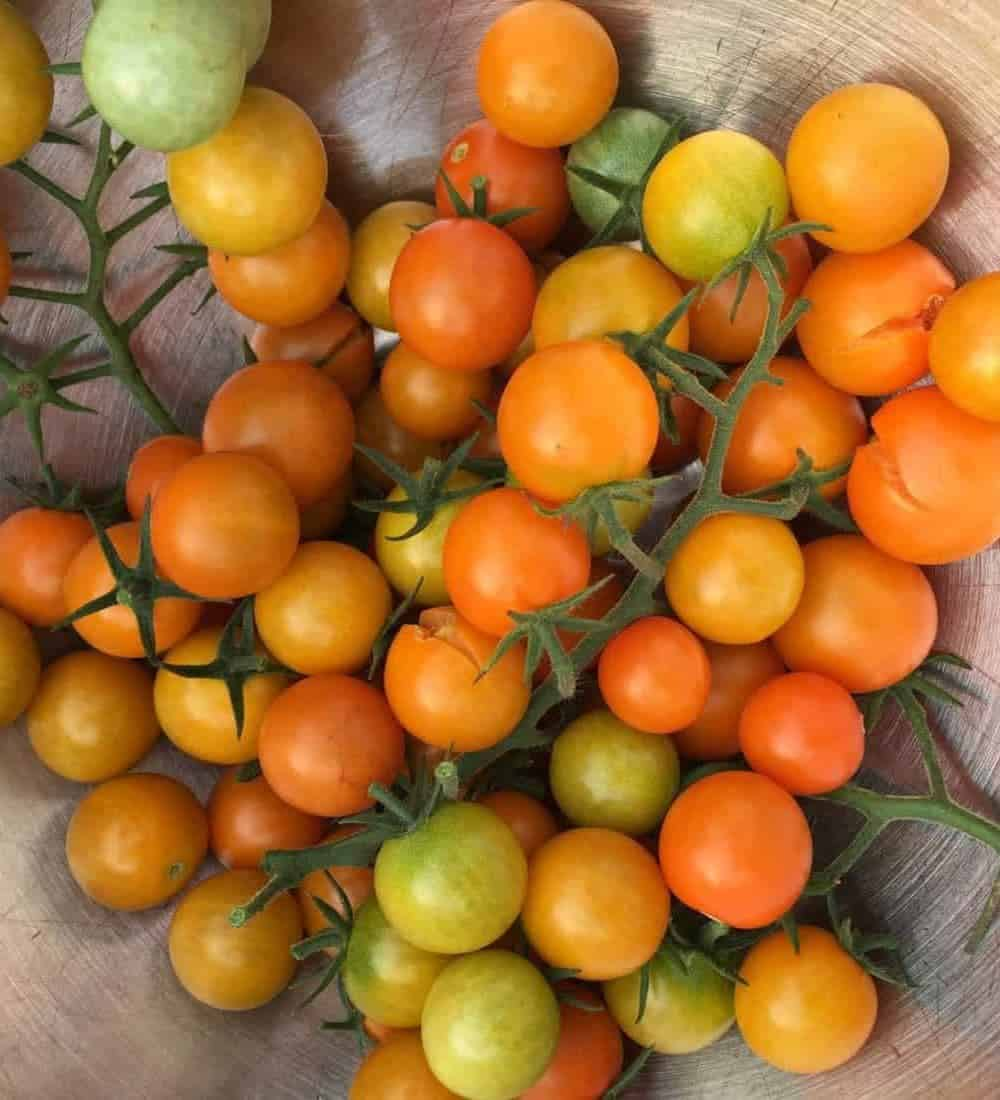 'Sungold' cherry tomatoes