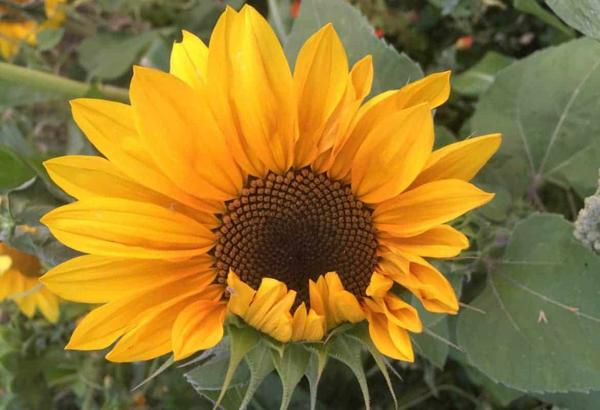 Fantastic Garden Blogs to Love (with Real Gardeners!)