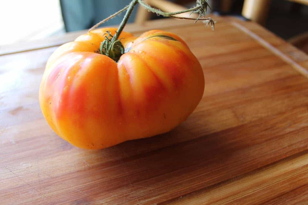 Heirloom 'Gold Medal' Tomatoes