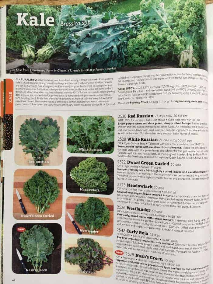 Selecting best kale varieties to grow