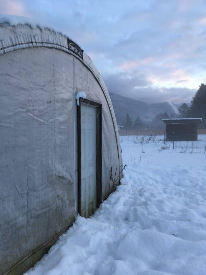 Growing food year-round in an unheated winter greenhouse