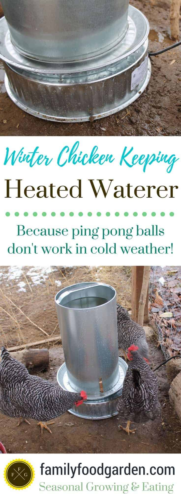 Using a heated chicken waterer for the winter months