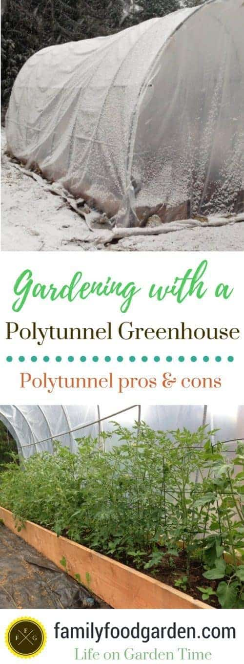Pros and cons to polytunnel greenhouses
