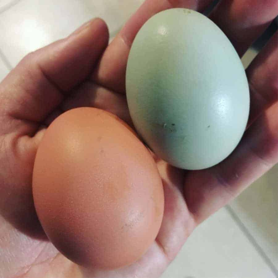 Chicken breeds that lay blue eggs