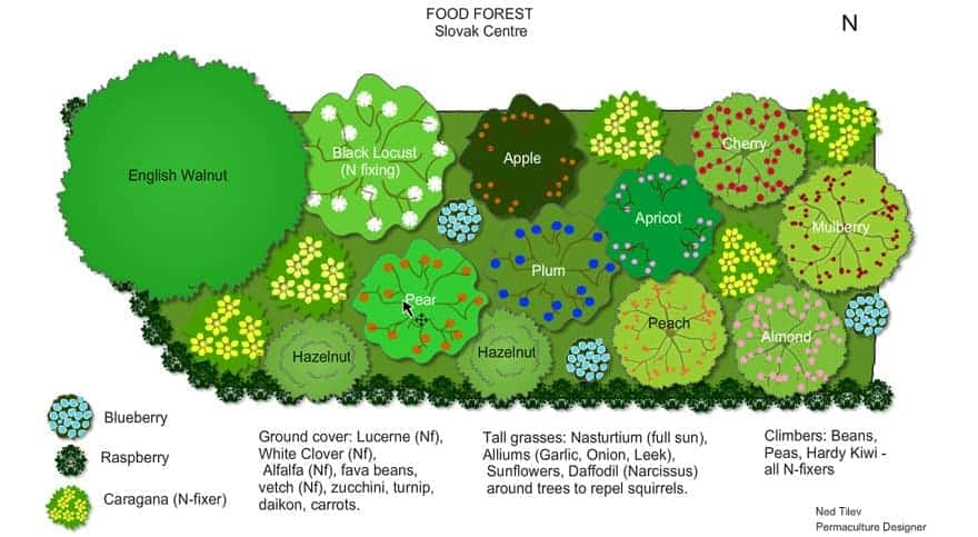Food Forest Permaculture Design