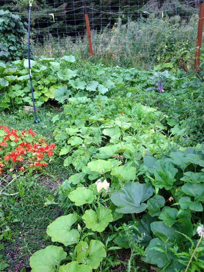 Permaculture companion planting