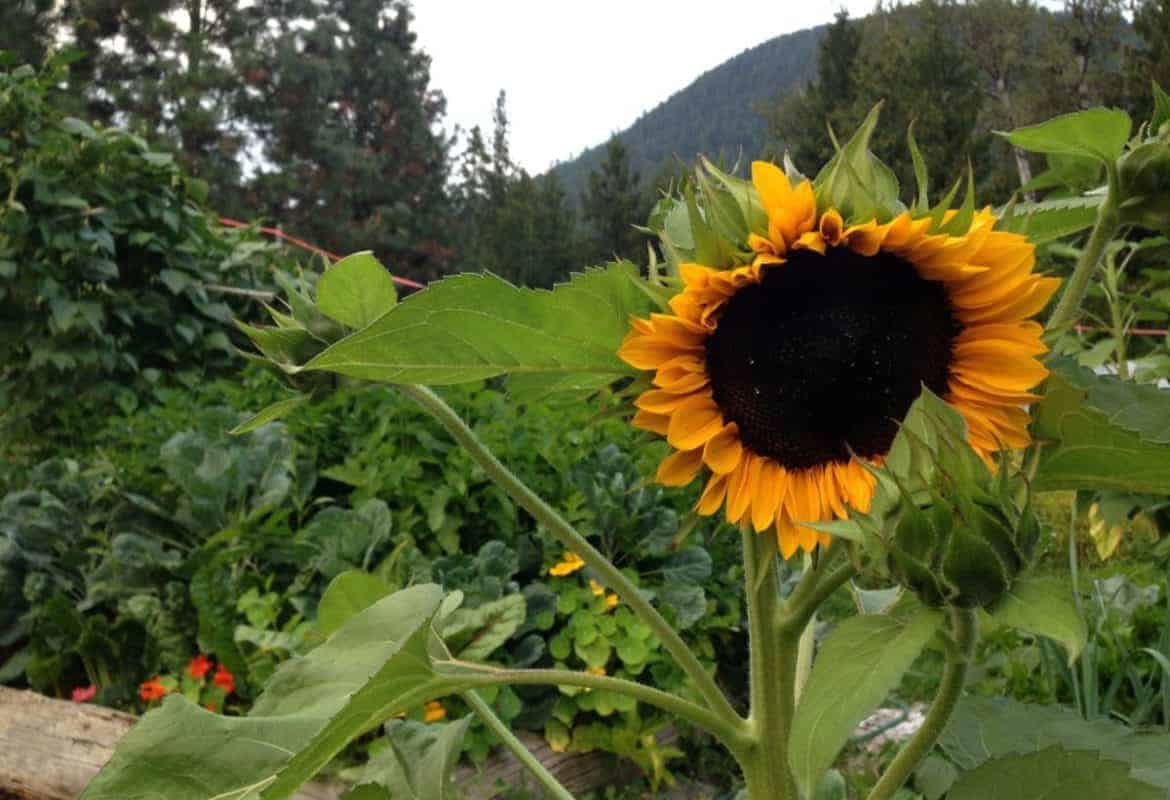 Grow a Permaculture Garden (Less Work + More Yields)
