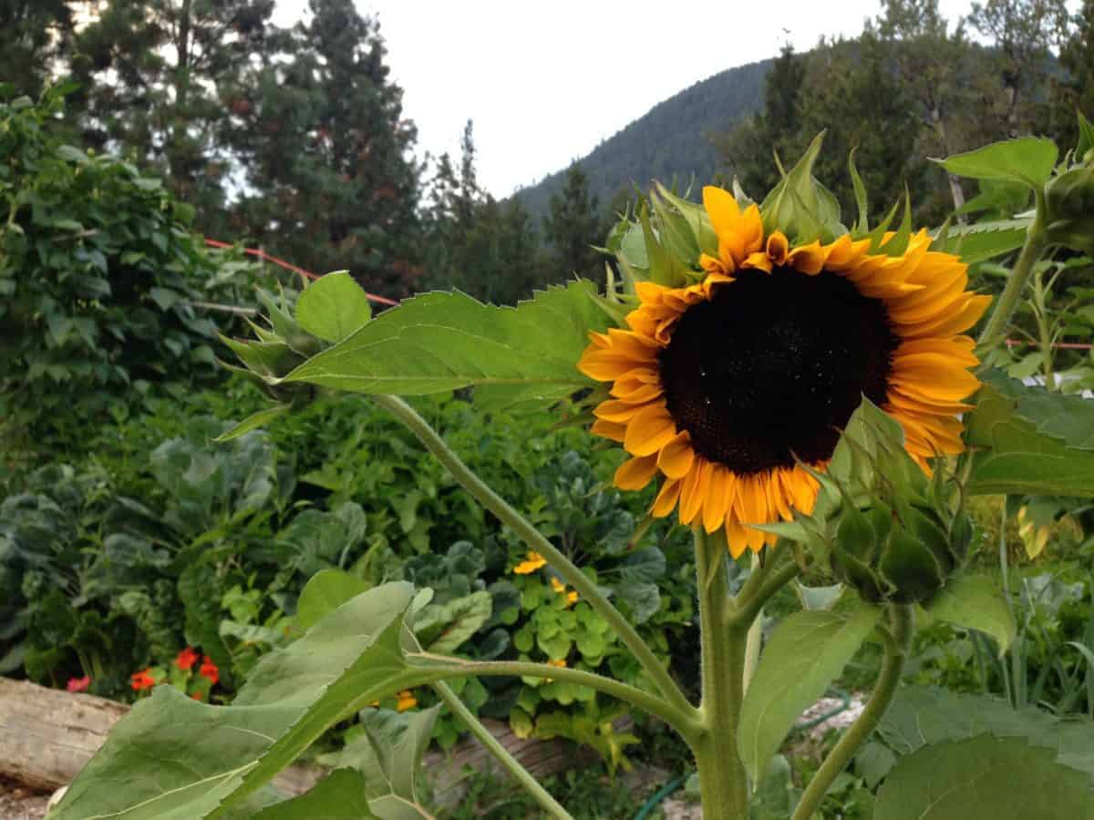 Family permaculture garden