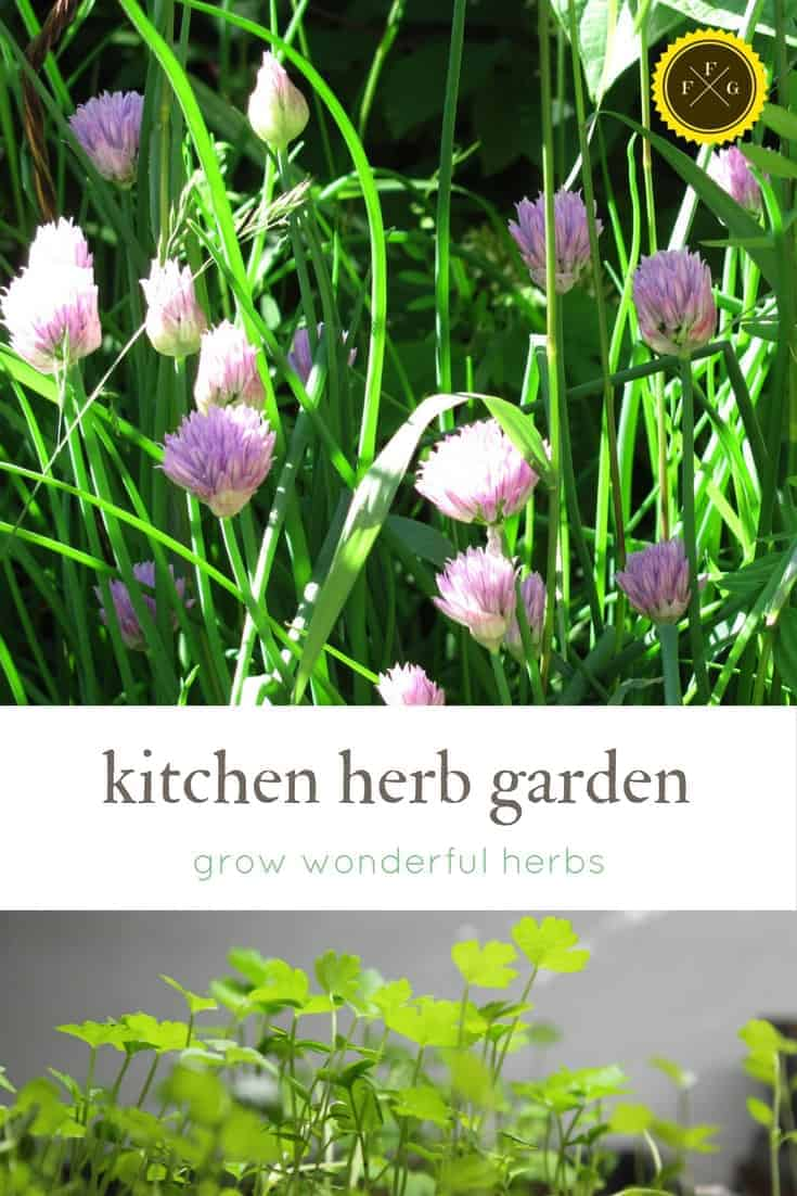 Plant a wonderful kitchen herb garden