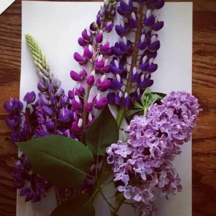 Lupines & lilacs