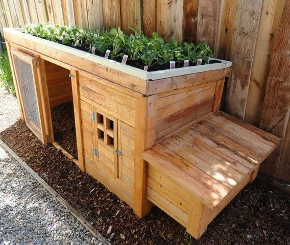 Chicken coop with garden roof