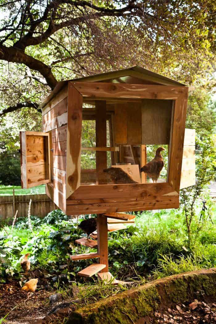 Fun chicken coops