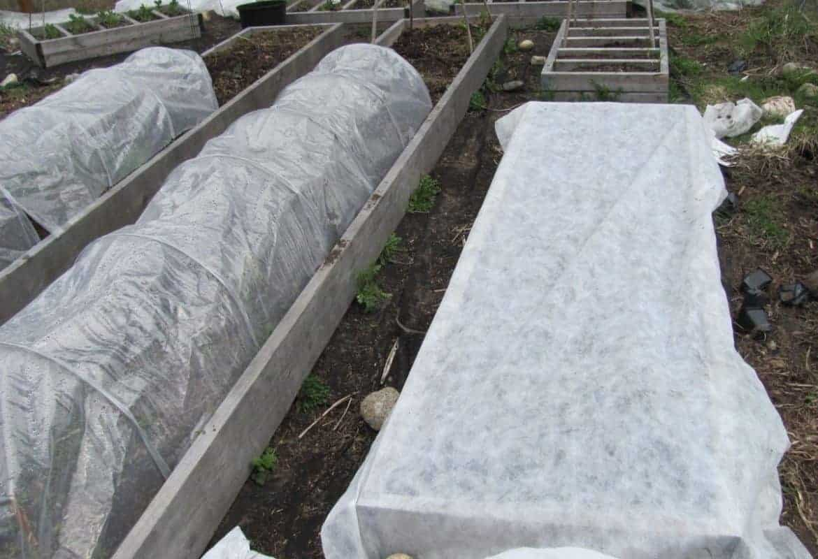 Frost Cloth! Protecting Plants from Frost with Row Covers