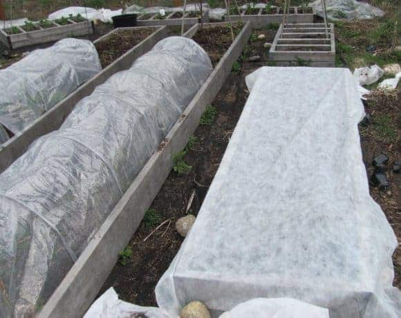 Using flowing row cover in the garden