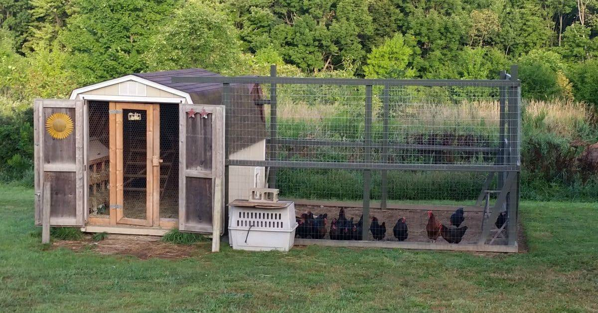 Shed turned into chicken coop