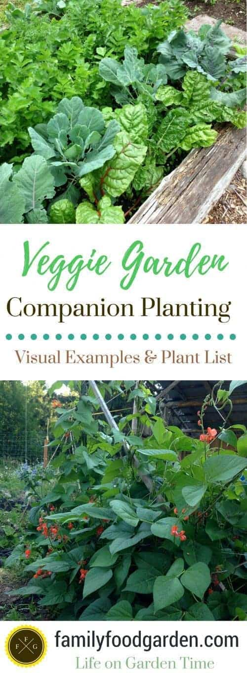 Here Are Some Visual Companion Planting Examples Of Garden Beds And What  Plants Are Grown Together.