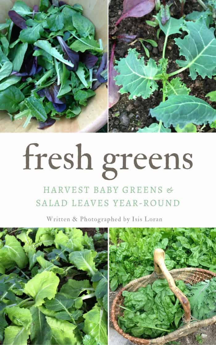 Fresh Greens- Learn how to grow salad leaves and baby greens year-round!